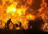 В епархиях Русской Православной Церкви идет сбор пожертвований в помощь пострадавшим от пожаров