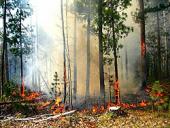 В Белоруссии проходит благотворительная акция в помощь пострадавшим от пожаров в России