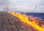 Саранская и Мордовская епархия помогает преодолеть последствия лесных пожаров