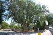 Архиепископ Егорьевский Марк: В Палестине рады появлению российского музейно-паркового комплекса в центре Иерихона